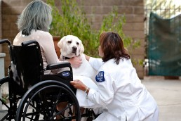 Pet therapy Volunteer
